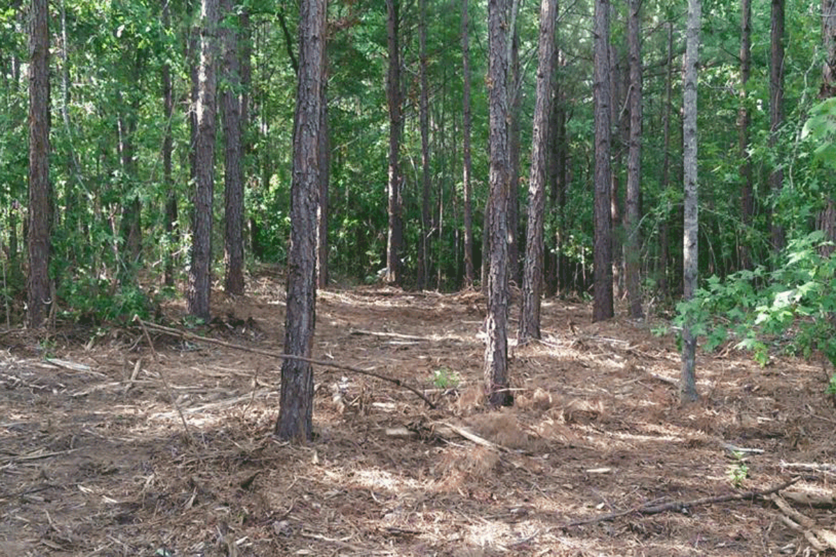 Example of our Forestry Mulching process