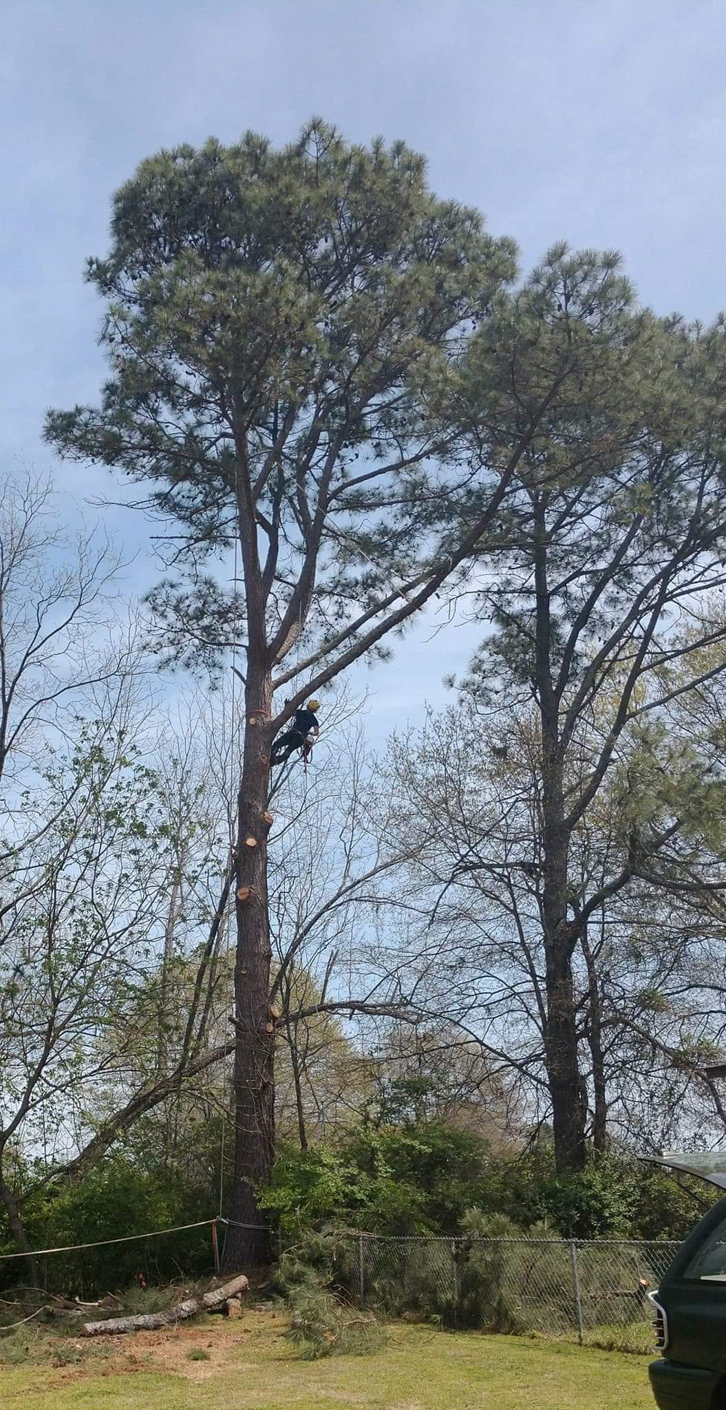 Our Tree Removal Service