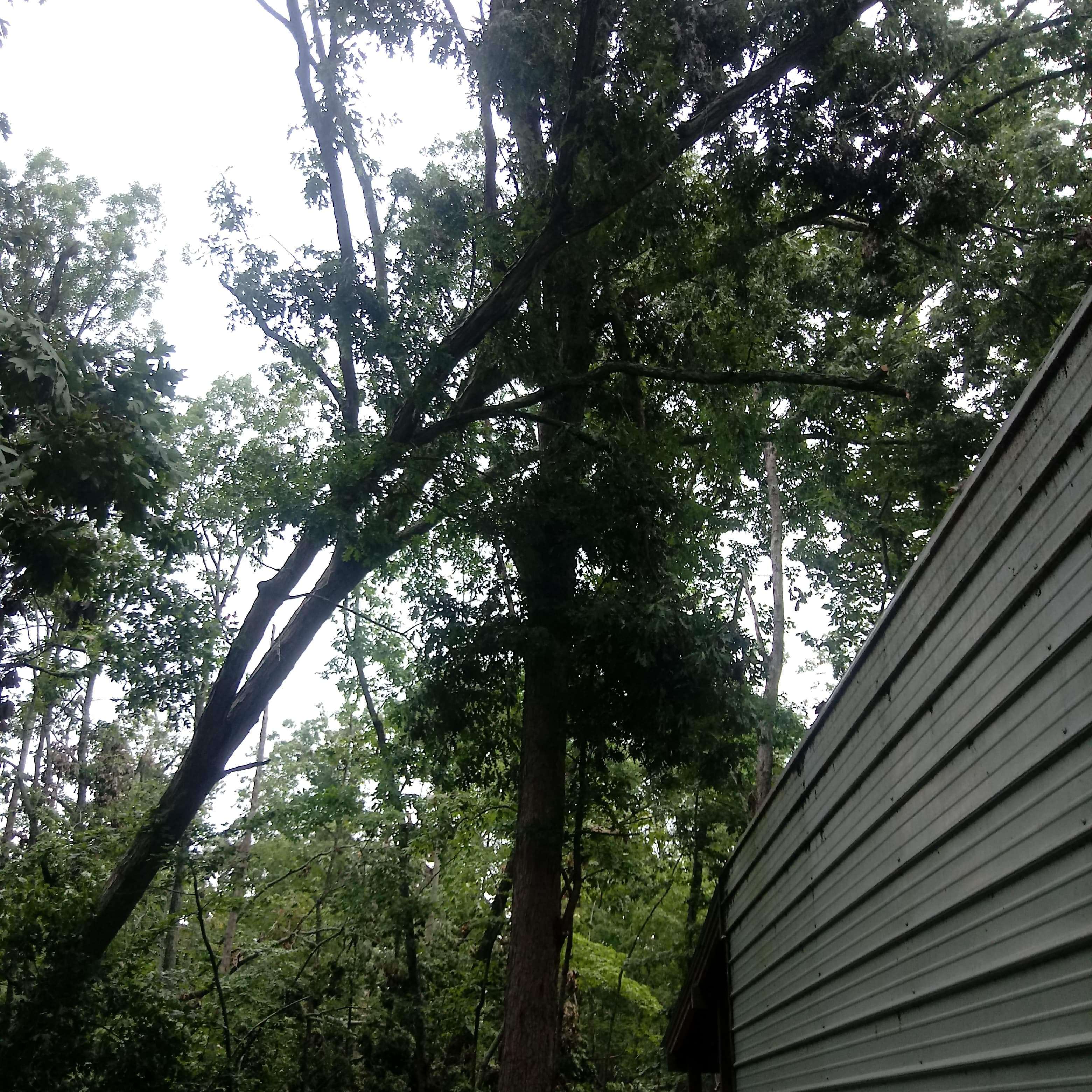 Tree Removal near building