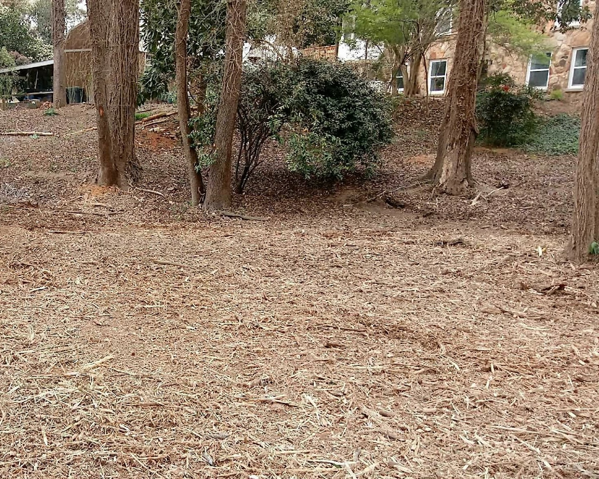 Forestry Mulching used to open up more property