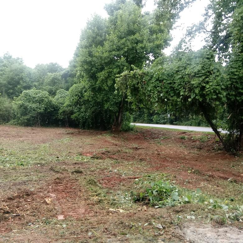 Forestry Mulching Kudzu Patch
